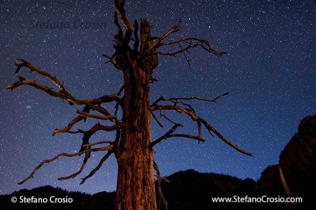 Incense cedar tree at night in Yosemite Valley, CA