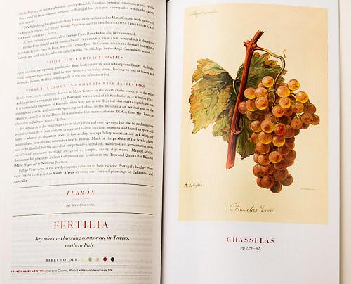 Wine Grapes, by Robinson-Harding-Vouillamoz, Allen Lane 2012