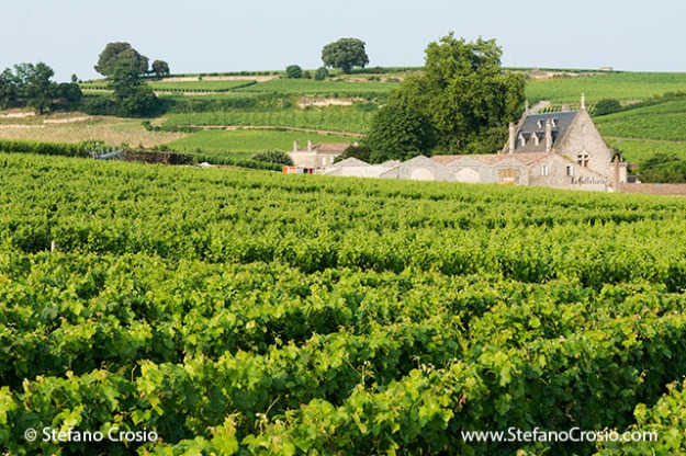 Saint Emilion: Chateau La Gaffeliere and its vineyards