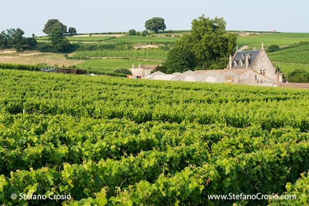 Saint Emilion: Chateau La Gaffeliere and its vineyards