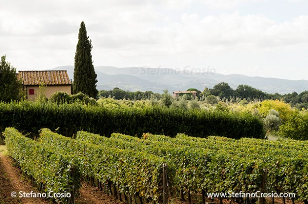Italy, Bolgheri: vineyards in the Bolgheri DOC appellation