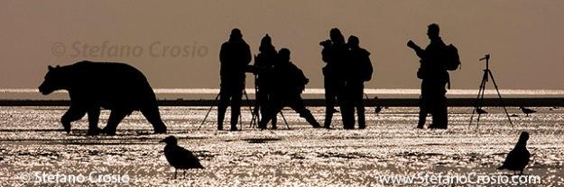 Photographers and coastal brown bear (Ursus arctos)
