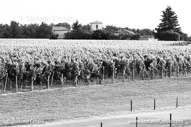 The vineyards of Chateau de Ferrand (Grand Cru Classé)