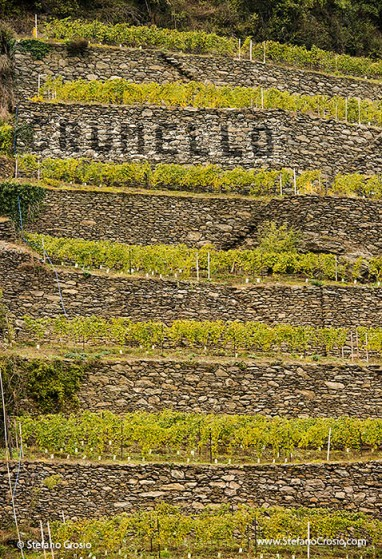 Valtellina mountain vineyards